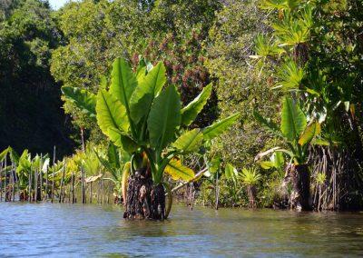 Andranokoditra canal des pangalanes